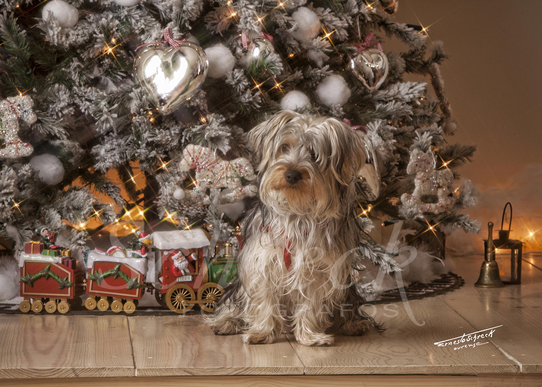 Naviddad_Schreckfotografos_EstudioSchreck_Christmasphoto003