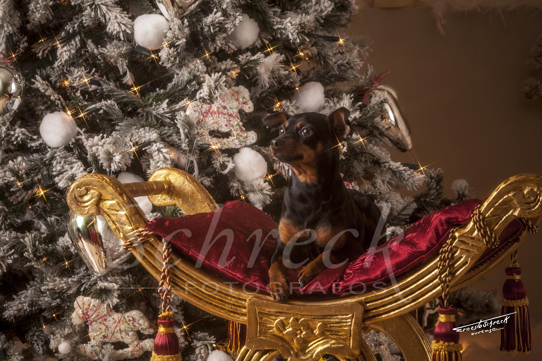 Naviddad_Schreckfotografos_EstudioSchreck_Christmasphoto004