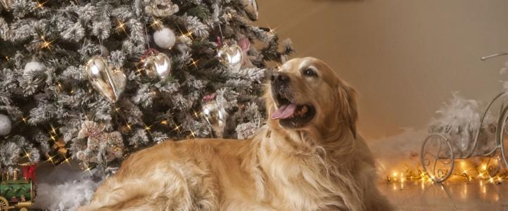 Nuestras mascotas también celebran  la Navidad en Schreck